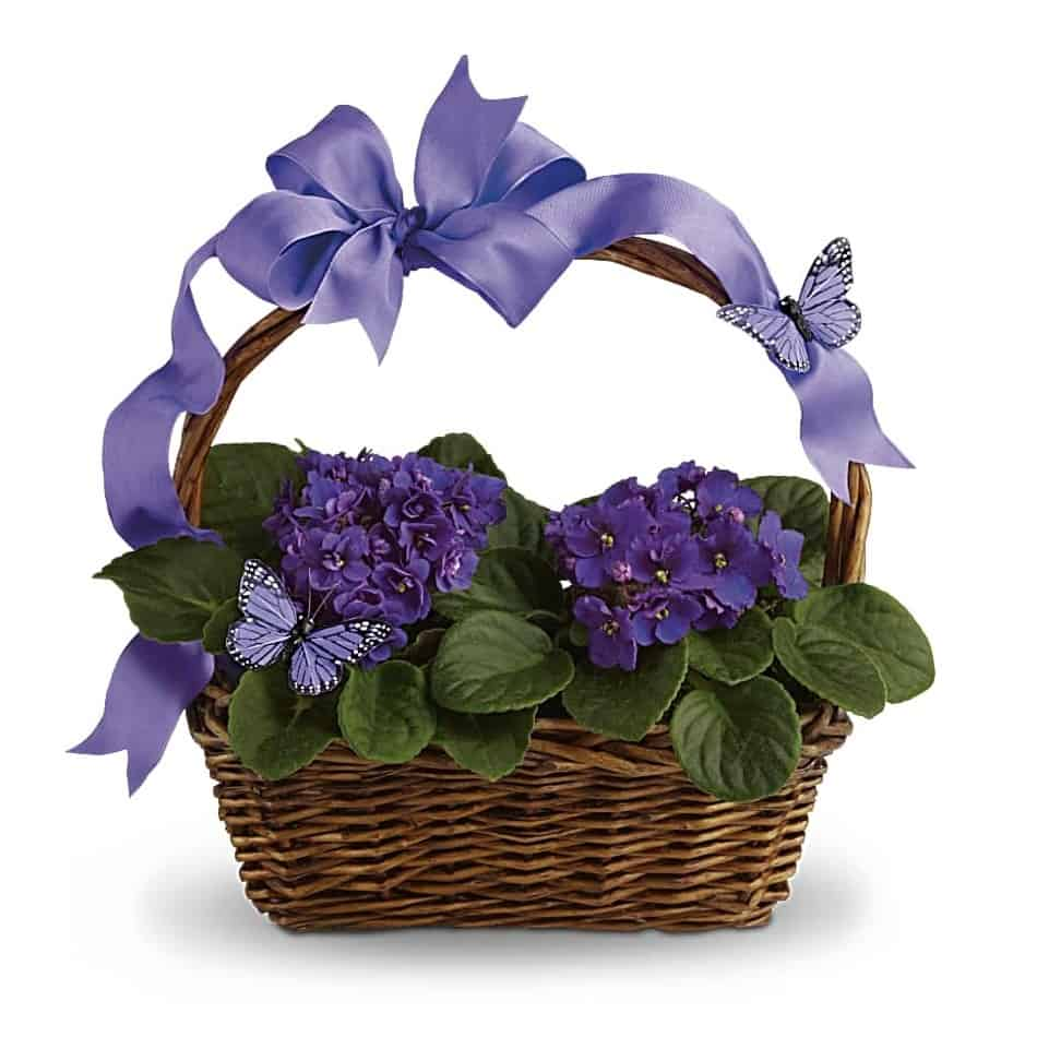 Violets And Butterflies Flower Basket