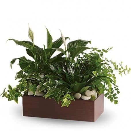 Quiet Expressions Plant Gift